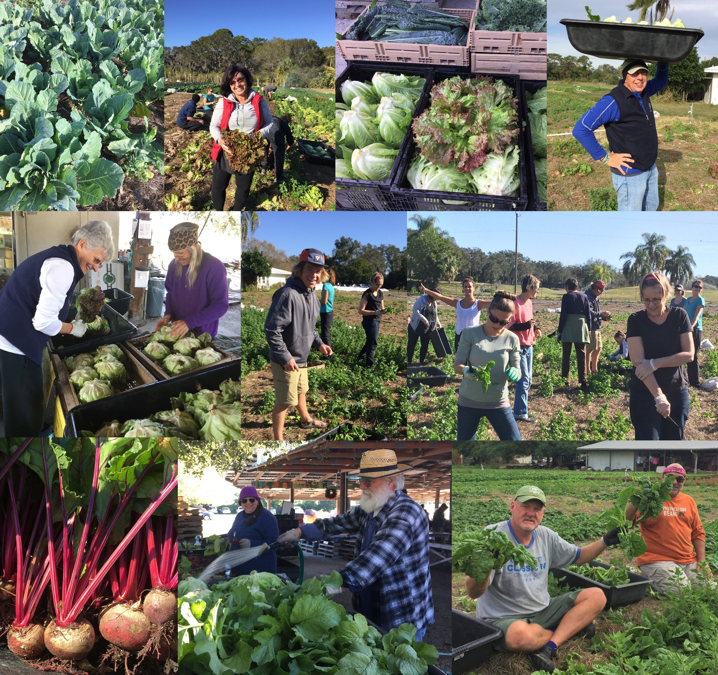 Suncoast Gleaning Program 2018_Photos only.jpg