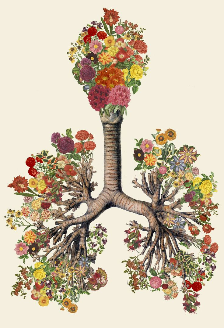 Anatomical Collages by Travis Bedel
