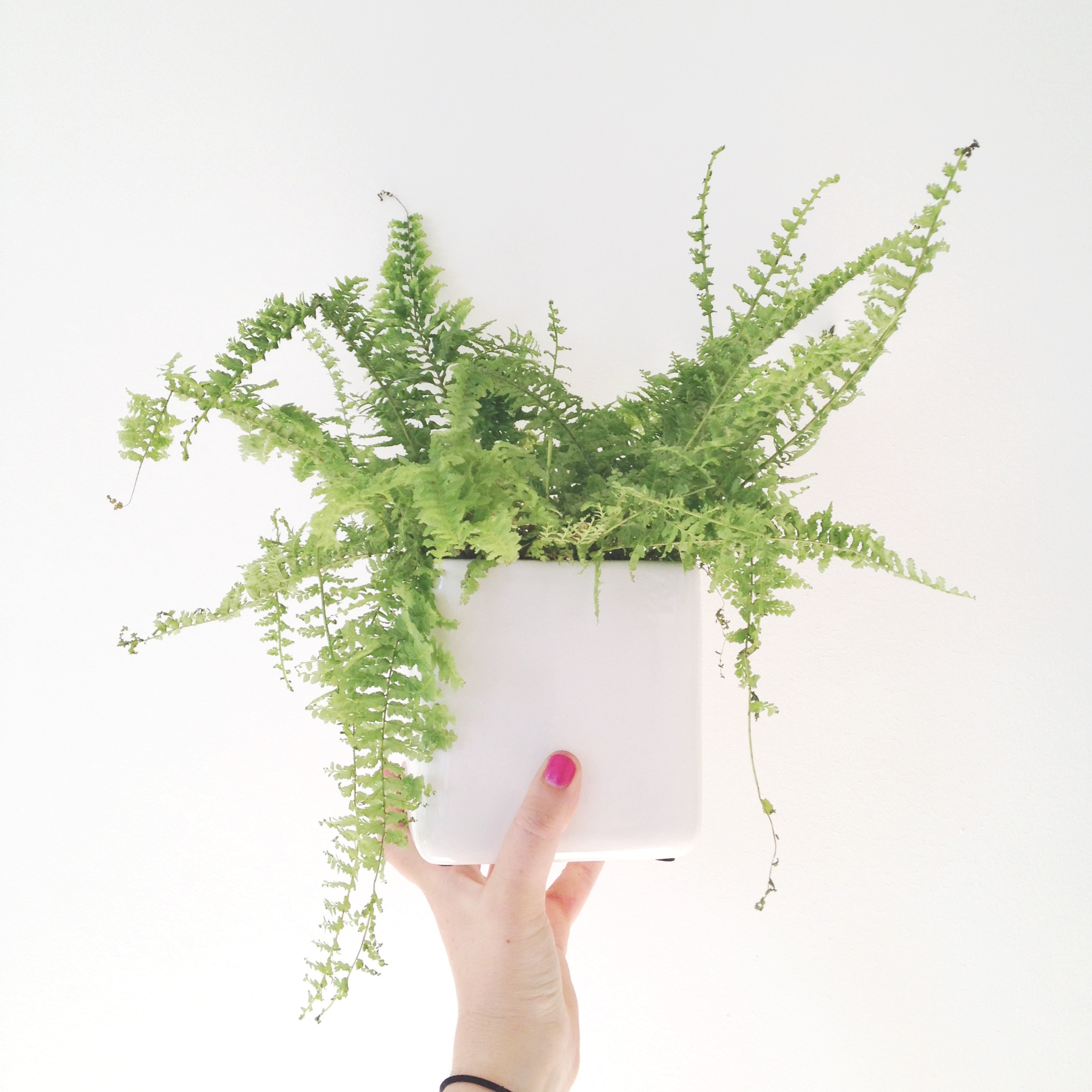 3//. this little fern - who I'm hoping to rescue cost a mere 50p at IKEA, pot and all. It was looking pretty sad though {& some of its pals were actually rotting!!}.