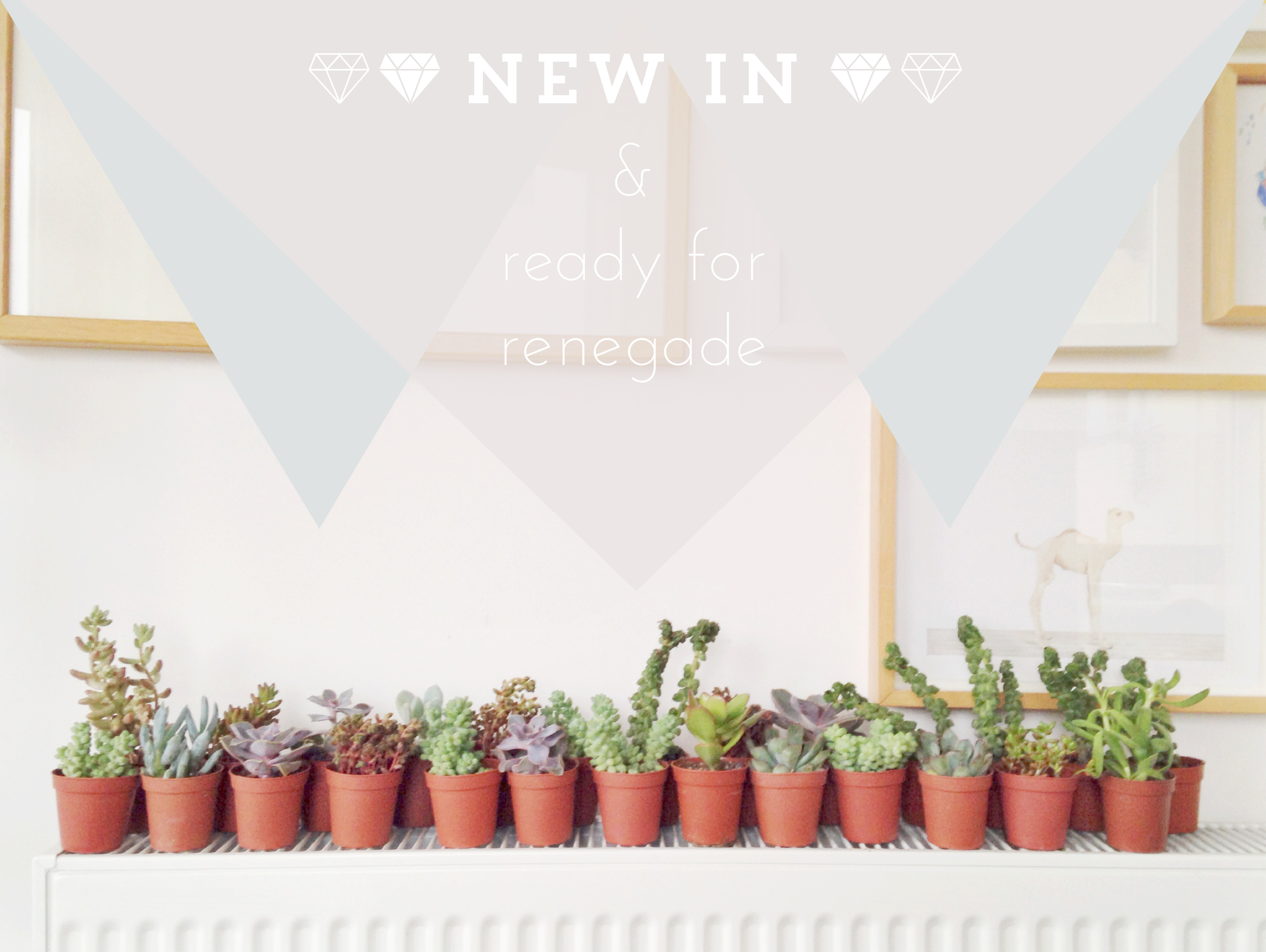 newsucculents-01.jpg