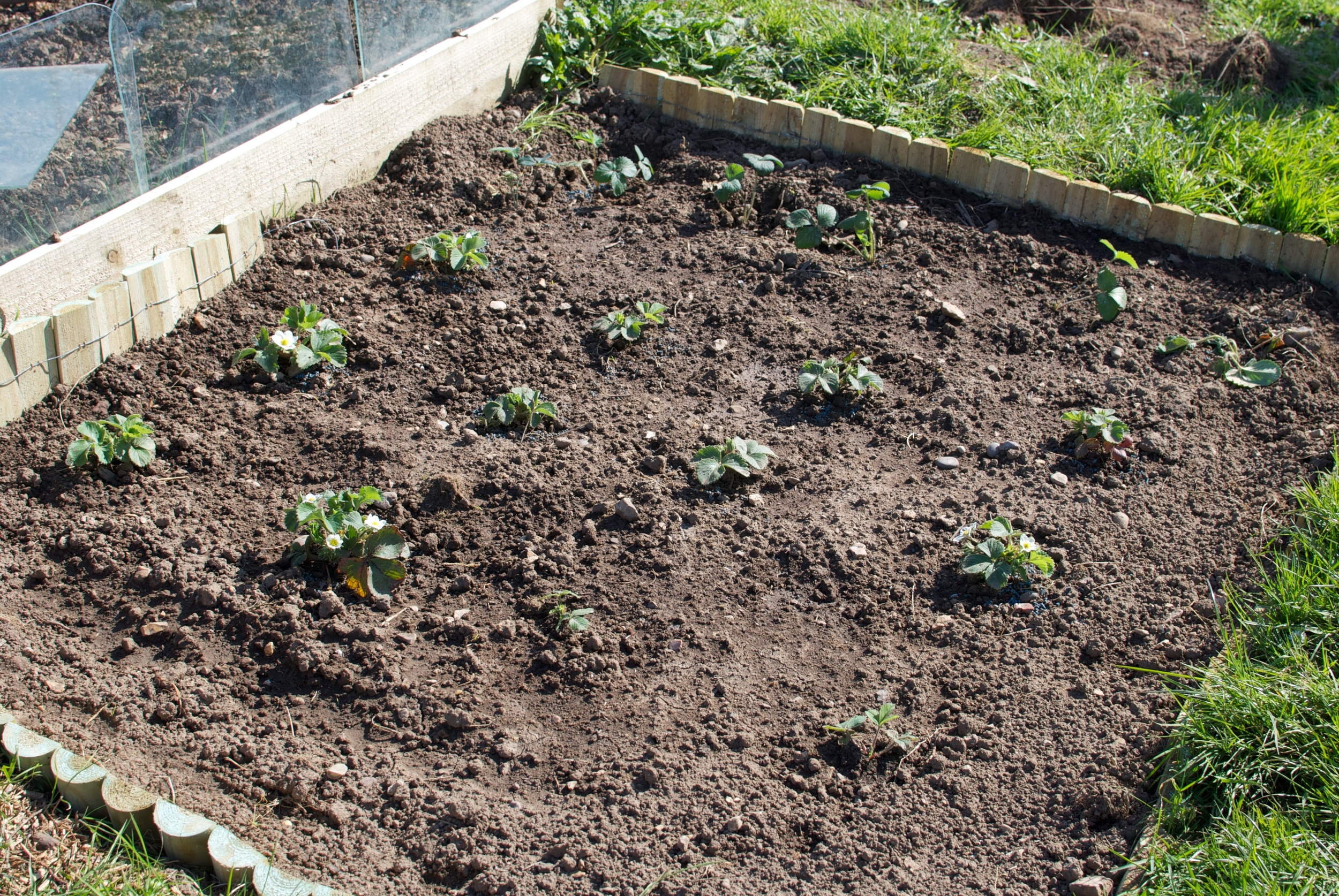 April Allotment 11.jpg