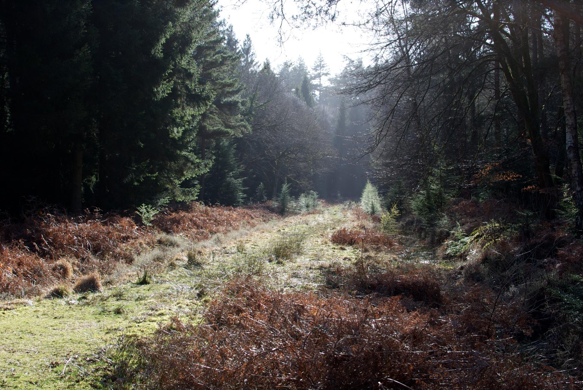 New forest 2.jpg