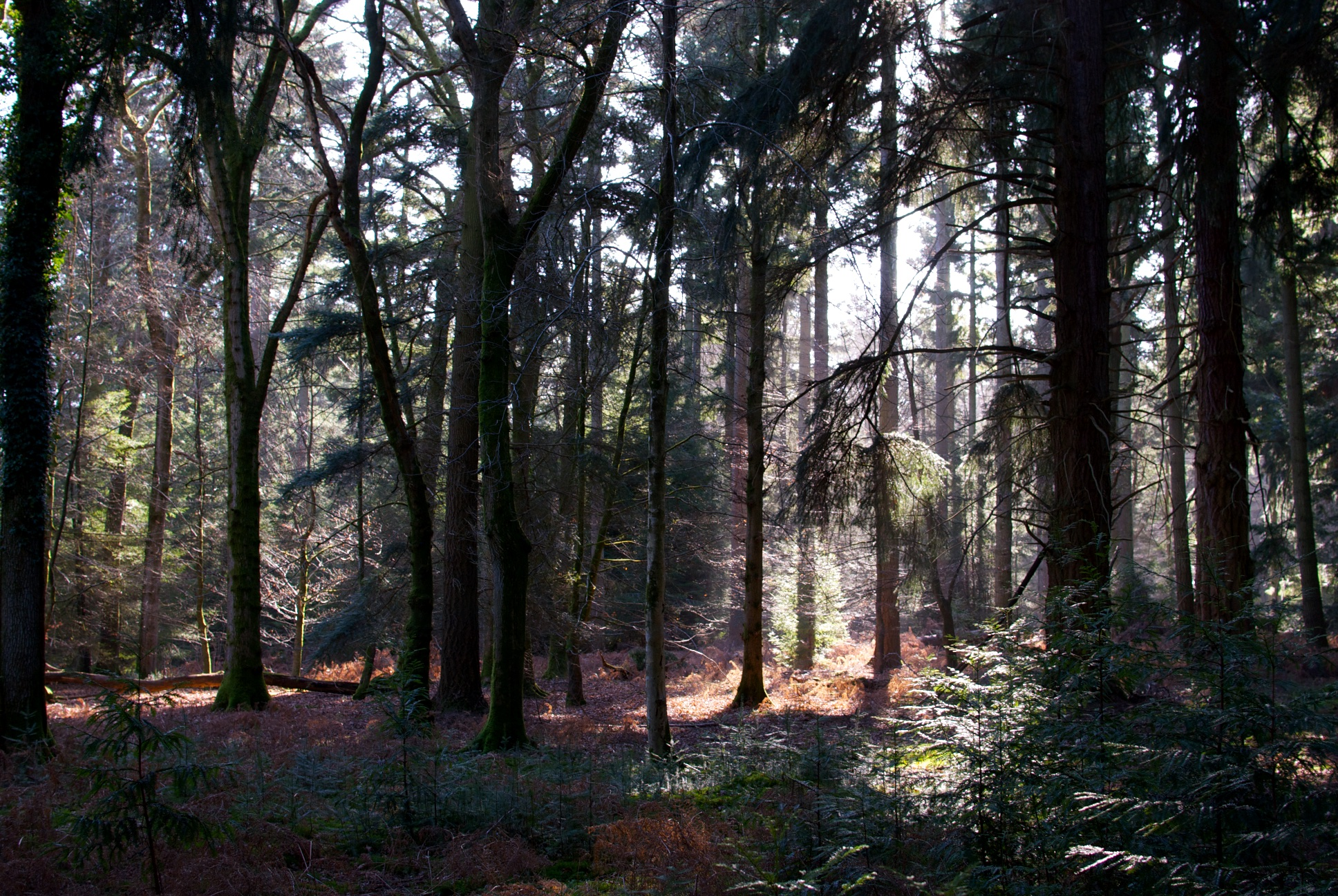 New forest 6.jpg