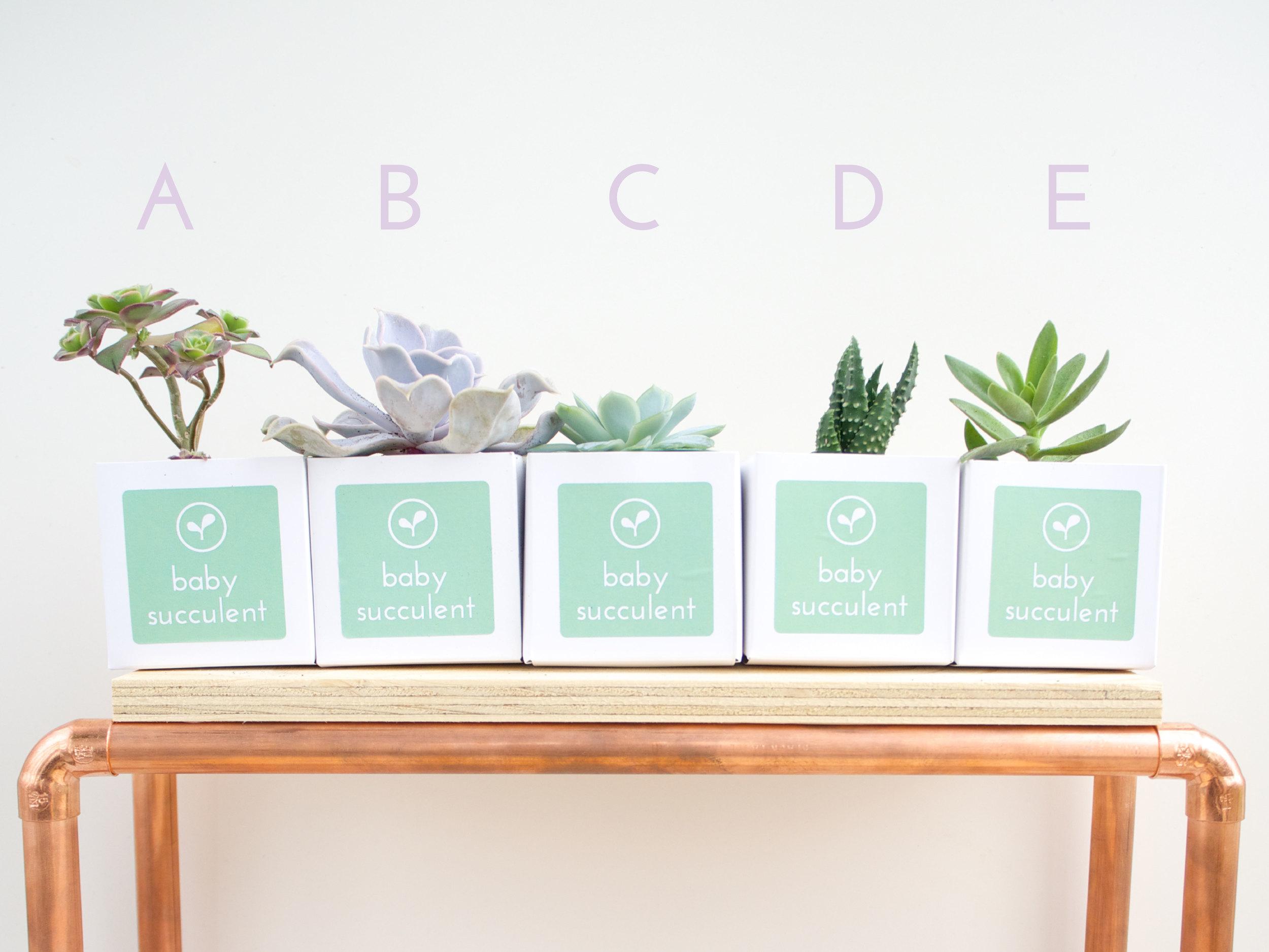 A-E Succulents-01.jpg