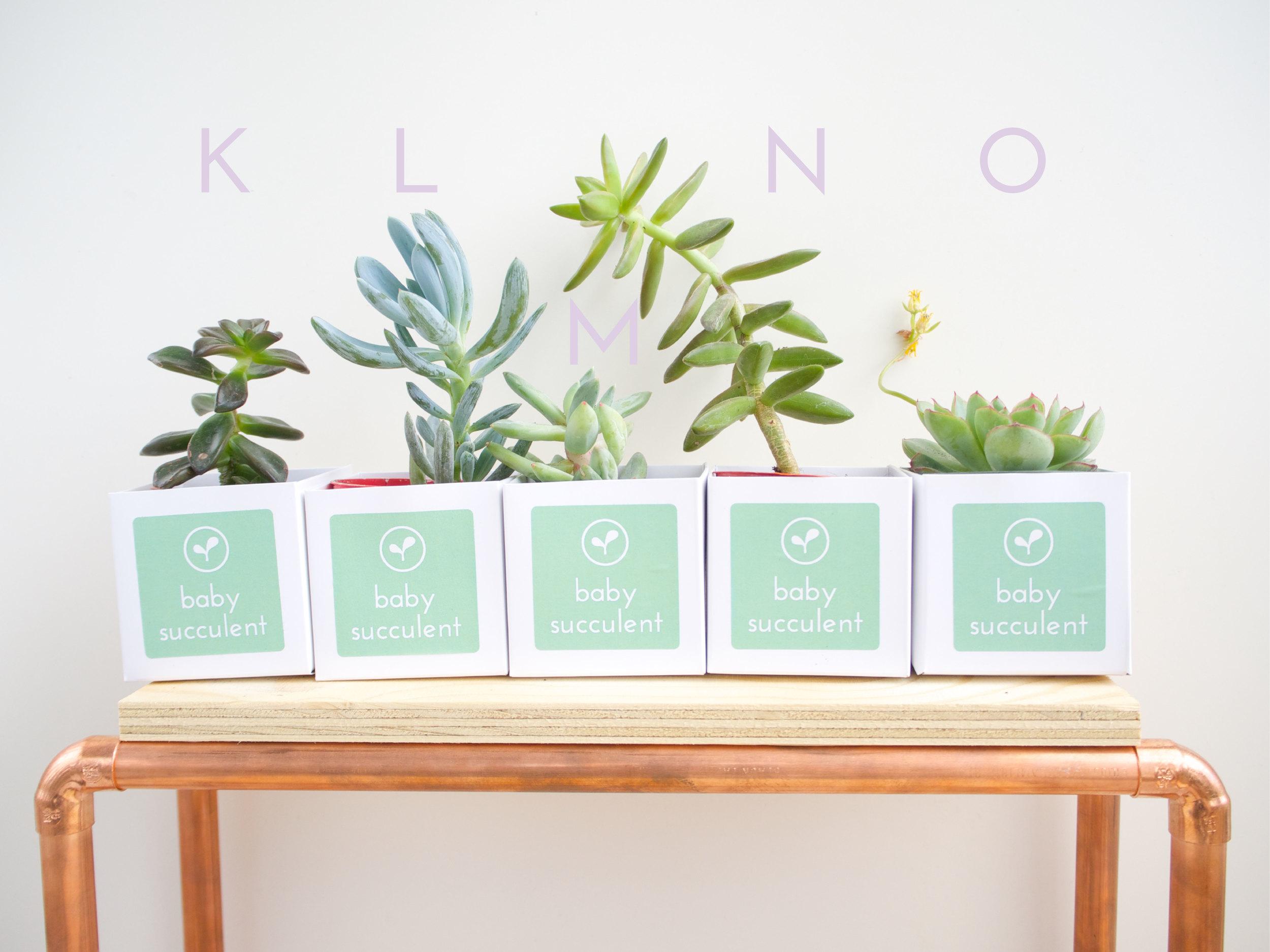 K-O Succulents-01.jpg
