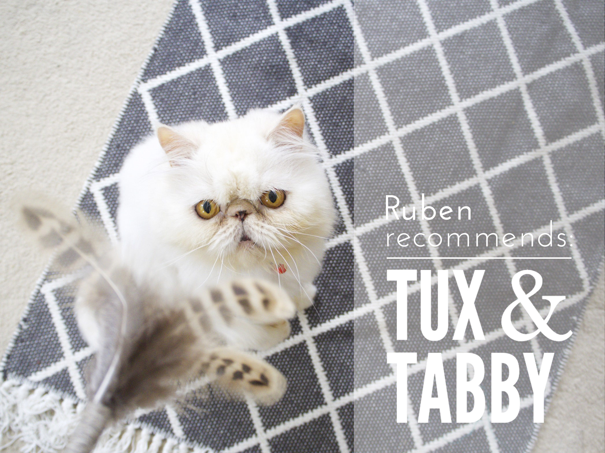 Ruben Recommends Tux Tabby.jpg