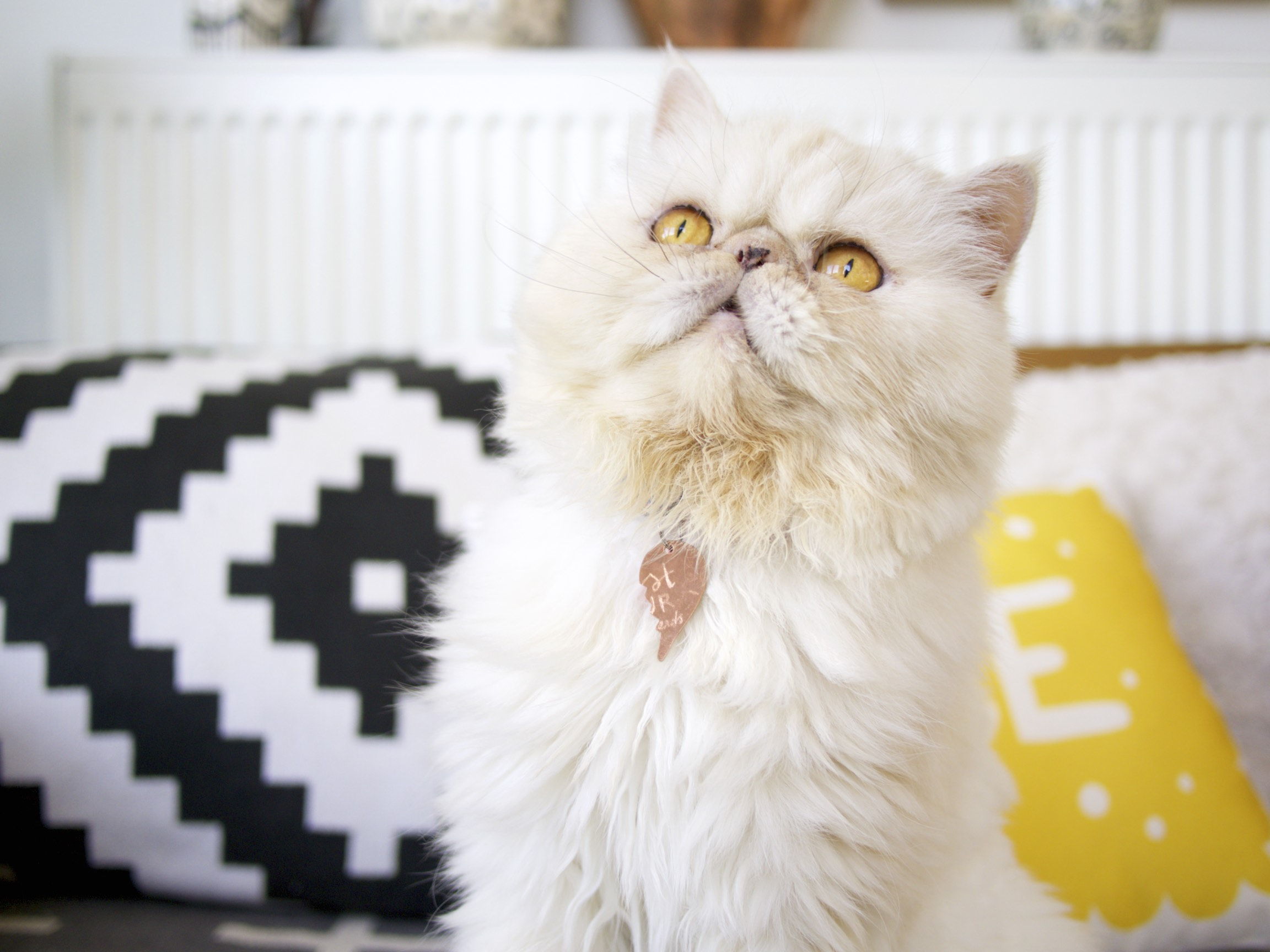 ohnorachio x Hello Harriet BFF Pet Collars - Ruben the Persian