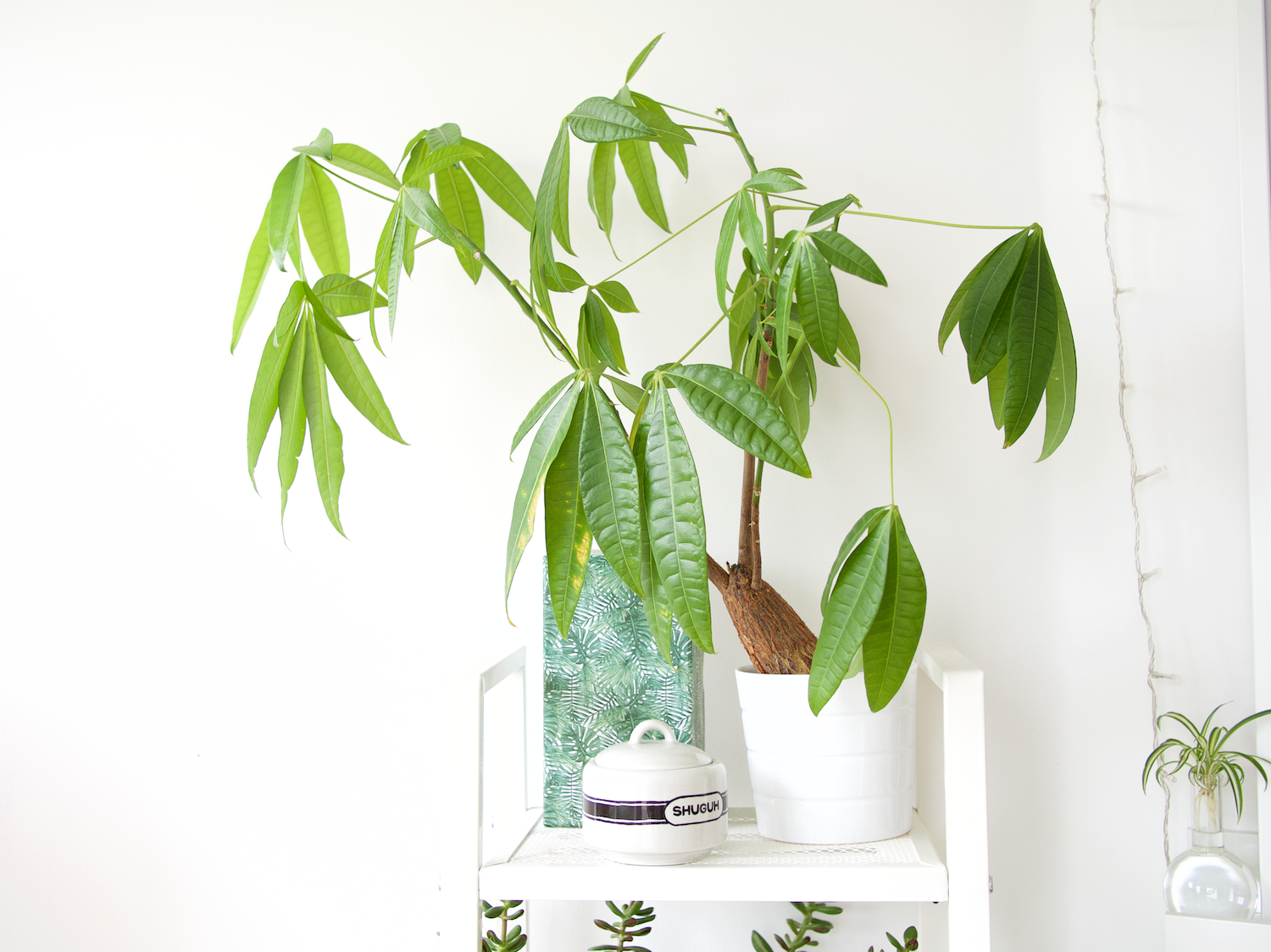 5 forgiving houseplants | onr. blog