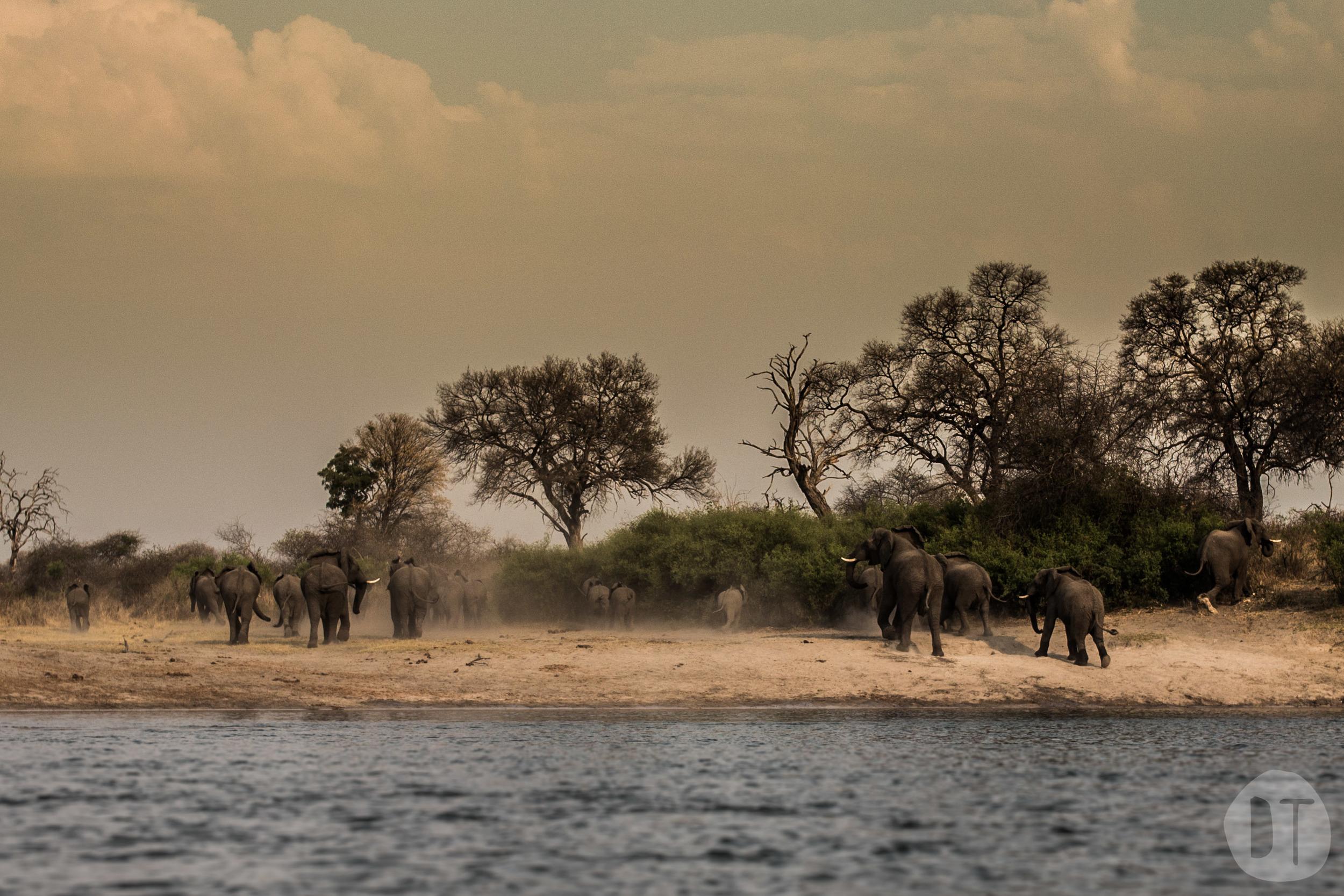 STAMPEDE, NAMIBIA