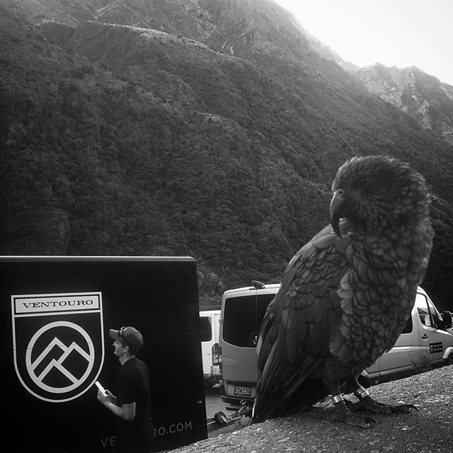 Making friends all round New Zealand with @jordangilmorecycling aka 'smiley' #kea #newzealand