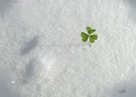shamrock in snow.png