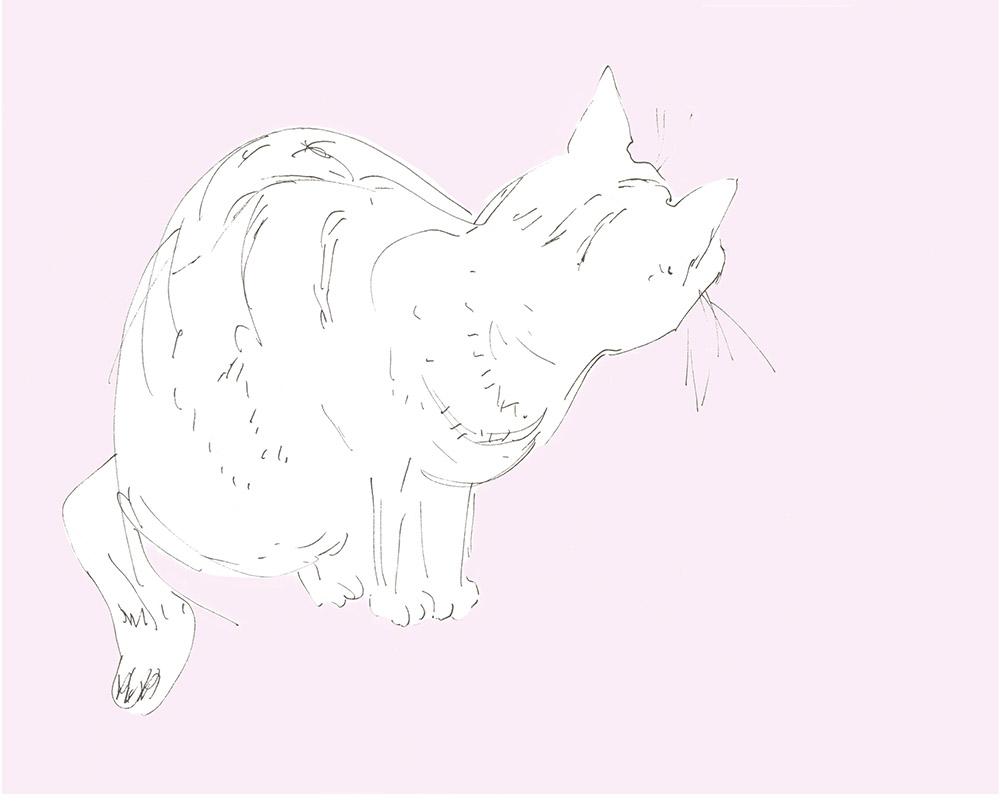Cat.No.2