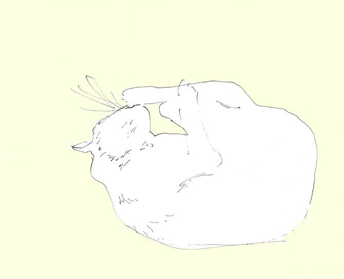 Cat.No.5