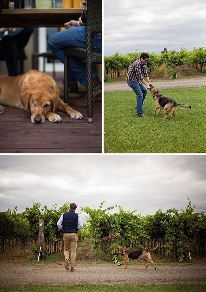 Kristen-LeQuire-Photography-Fortunati-Vineyards-Napa-Valley-CA-Dog-Friendly.jpg