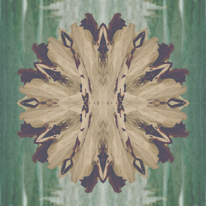 Supine pine cone. 20140226