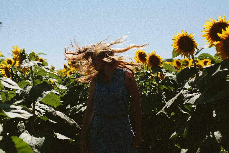 Sunflower Field Grinter's Farm in Lawrence KS-3.JPG