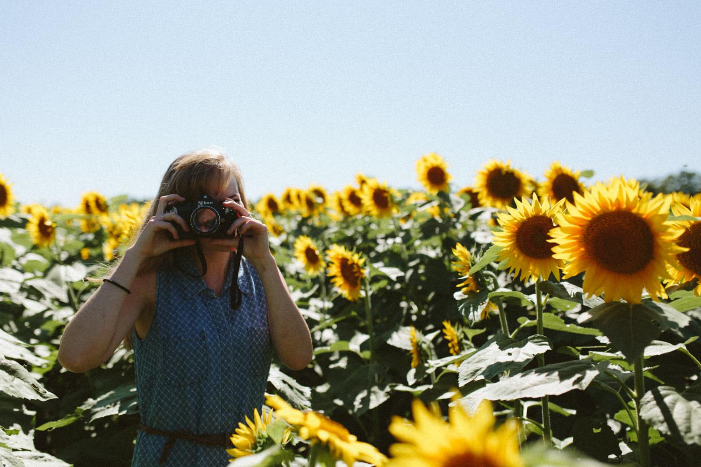 Sunflower Field Grinter's Farm in Lawrence KS-8.JPG
