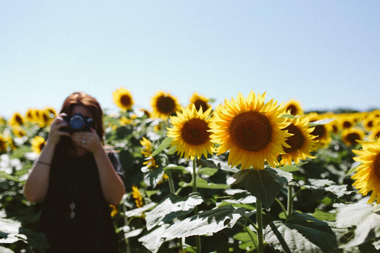 Sunflower Field Grinter's Farm in Lawrence KS-9.JPG