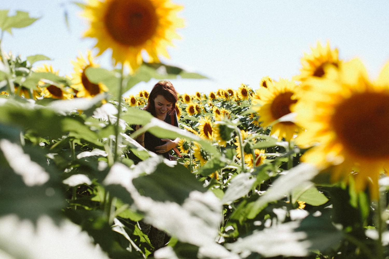 Sunflower Field Grinter's Farm in Lawrence KS-11.JPG