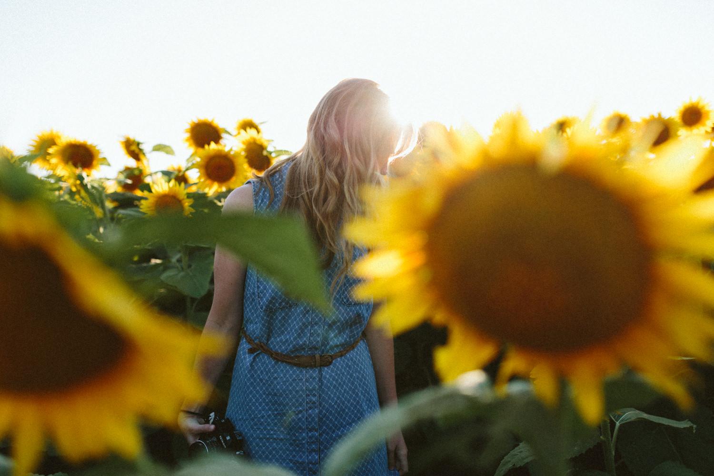 Sunflower Field Grinter's Farm in Lawrence KS-20.JPG