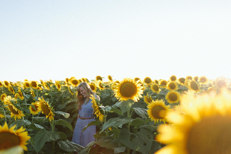 Sunflower Field Grinter's Farm in Lawrence KS-22.JPG