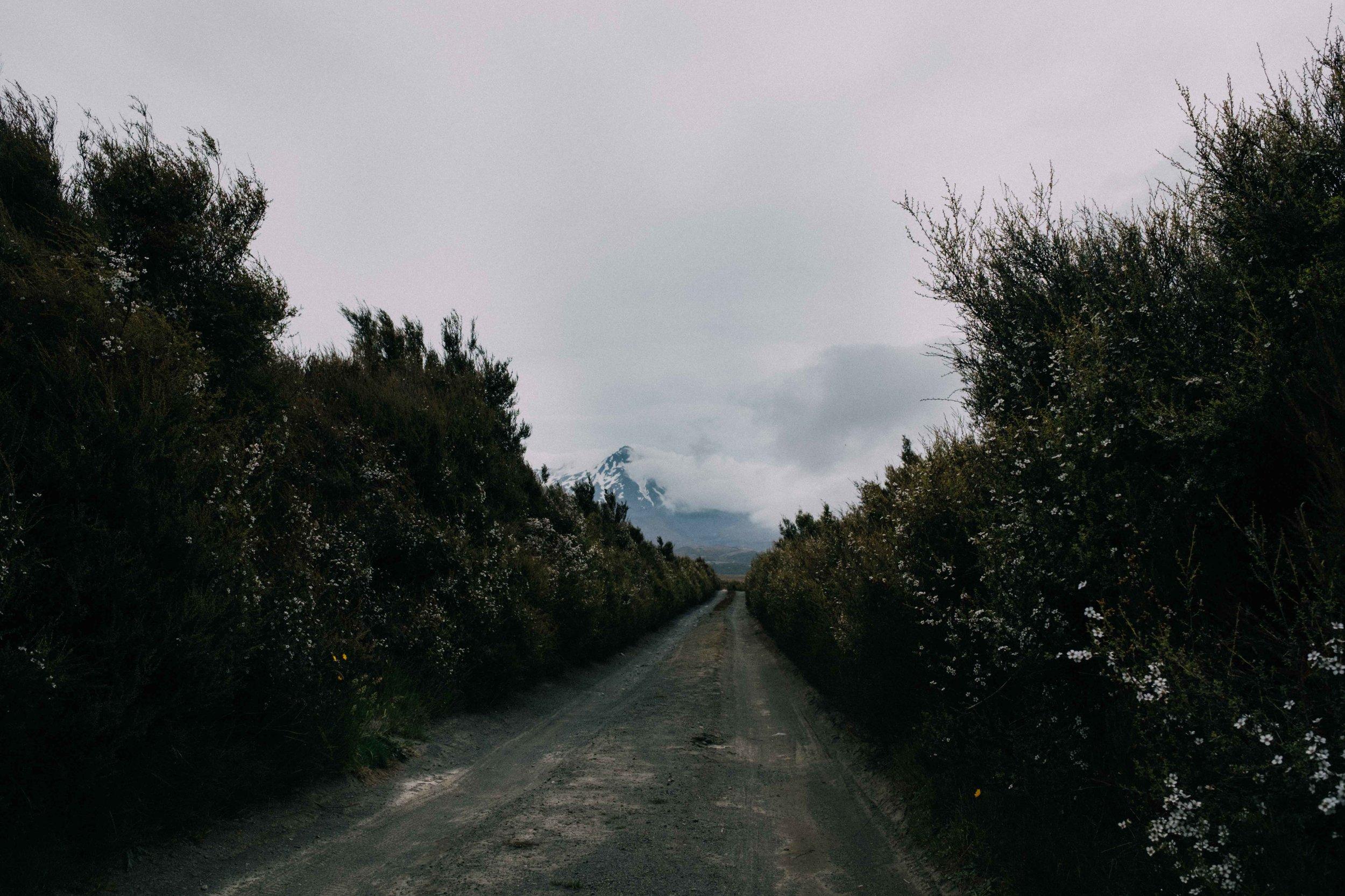 New Zealand small-9.jpg