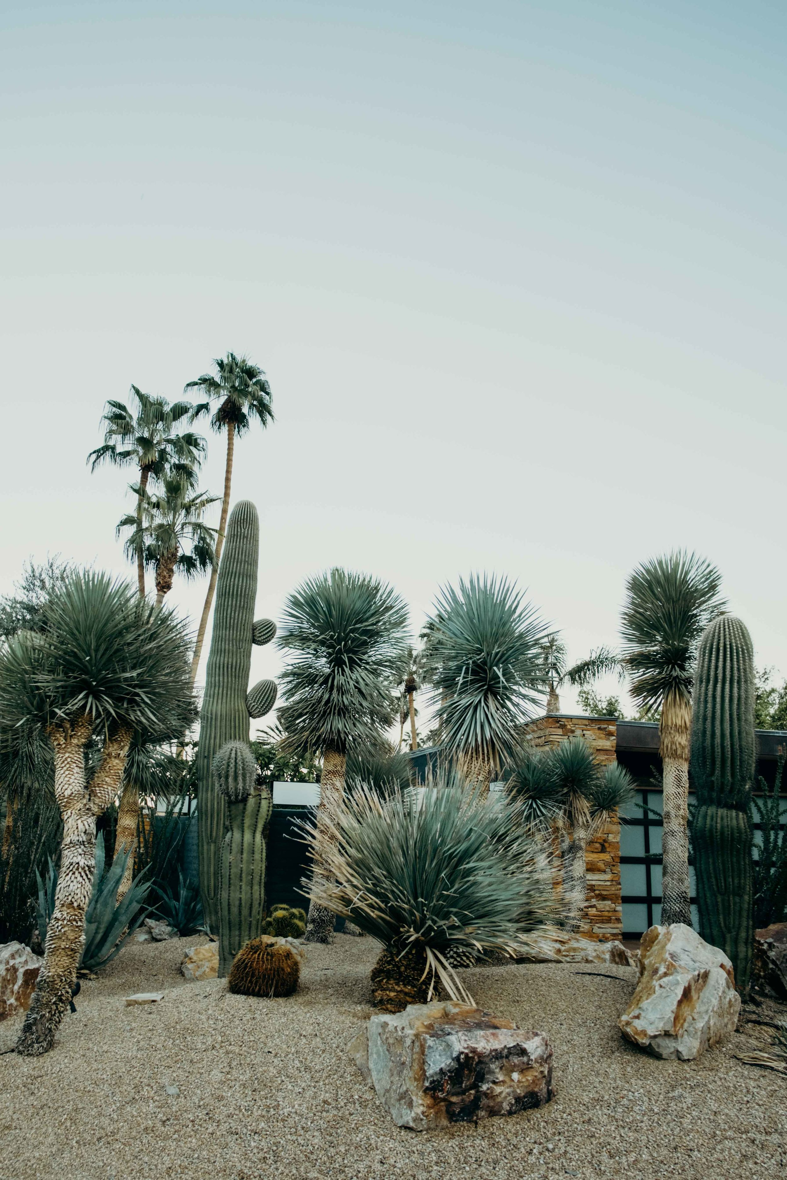 20171005_Palm Springs Travel Guide_46.jpg