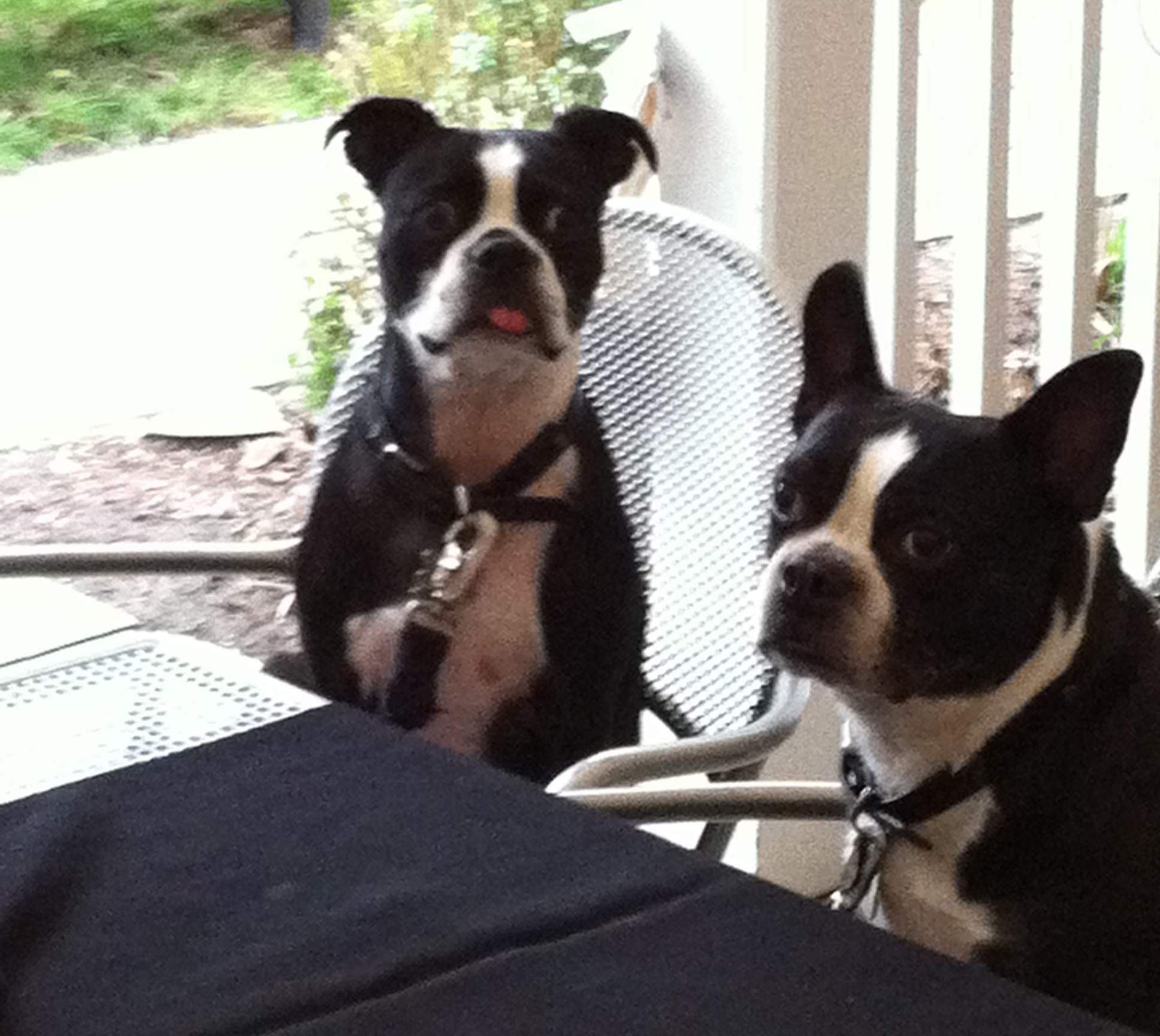 2dogs_2011-c.jpg