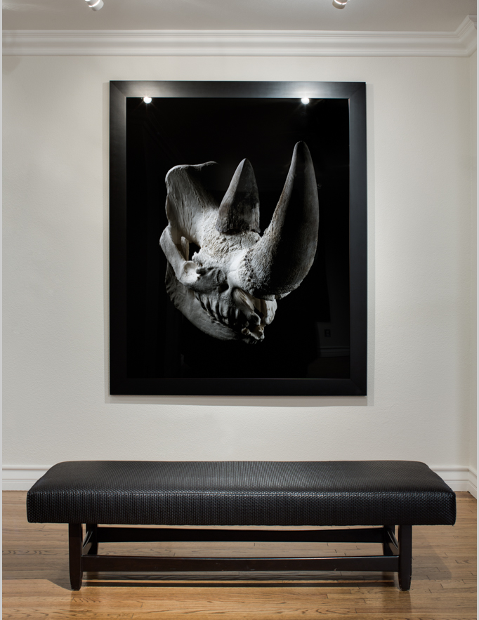 Rhino_Gallery_2.png