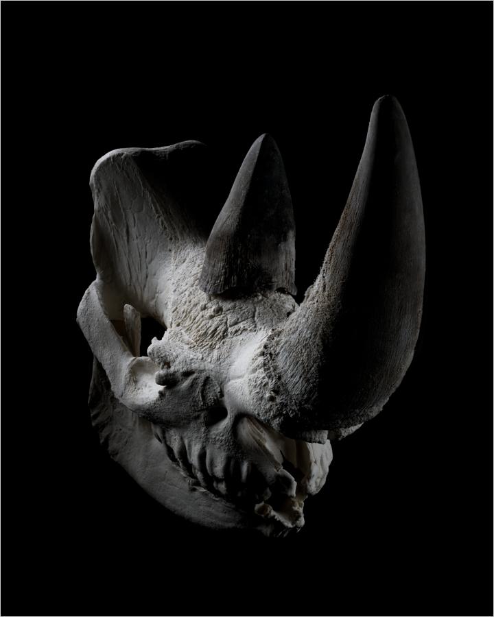 Eastern_Black_Rhino.png
