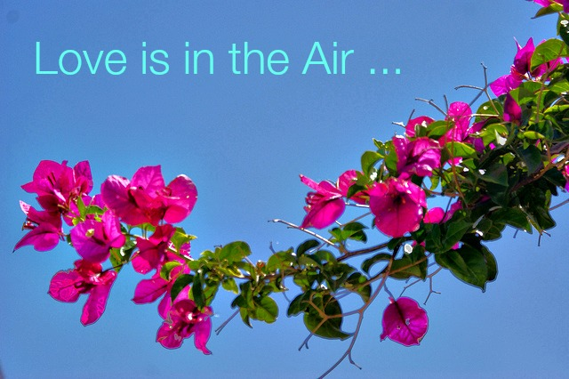 love is in the air.jpg