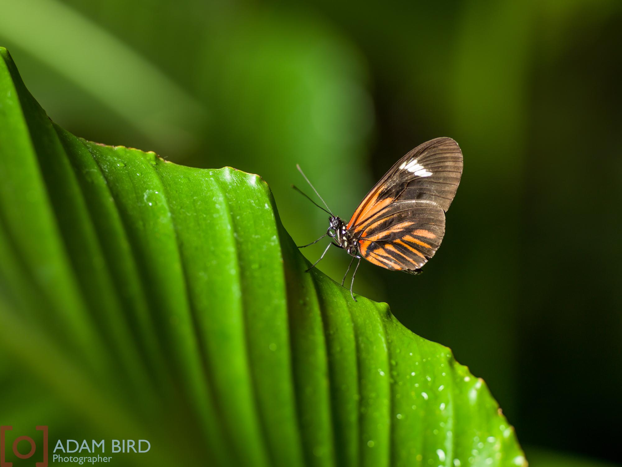 frederik_meijer_butterflies011.JPG