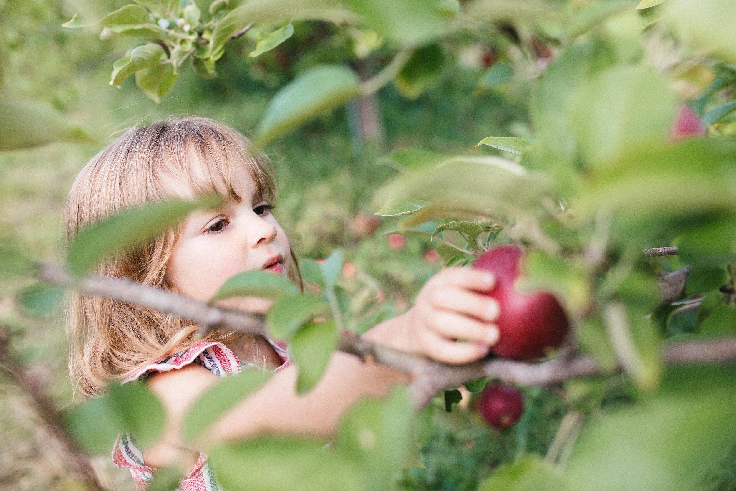 cami-apple-1-6.jpg