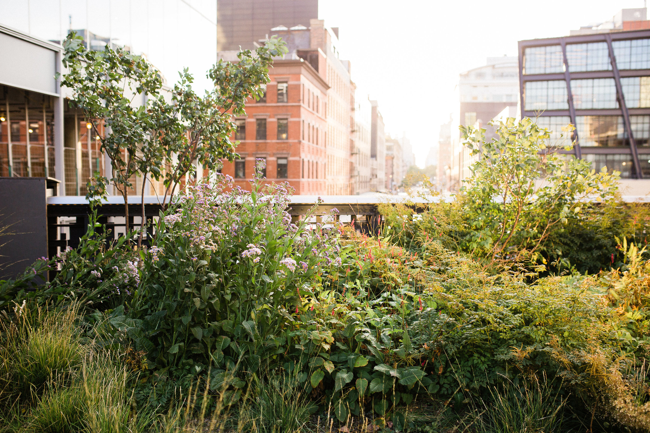 fritsch-family_highline-west-village-nyc-photography-2-2.jpg