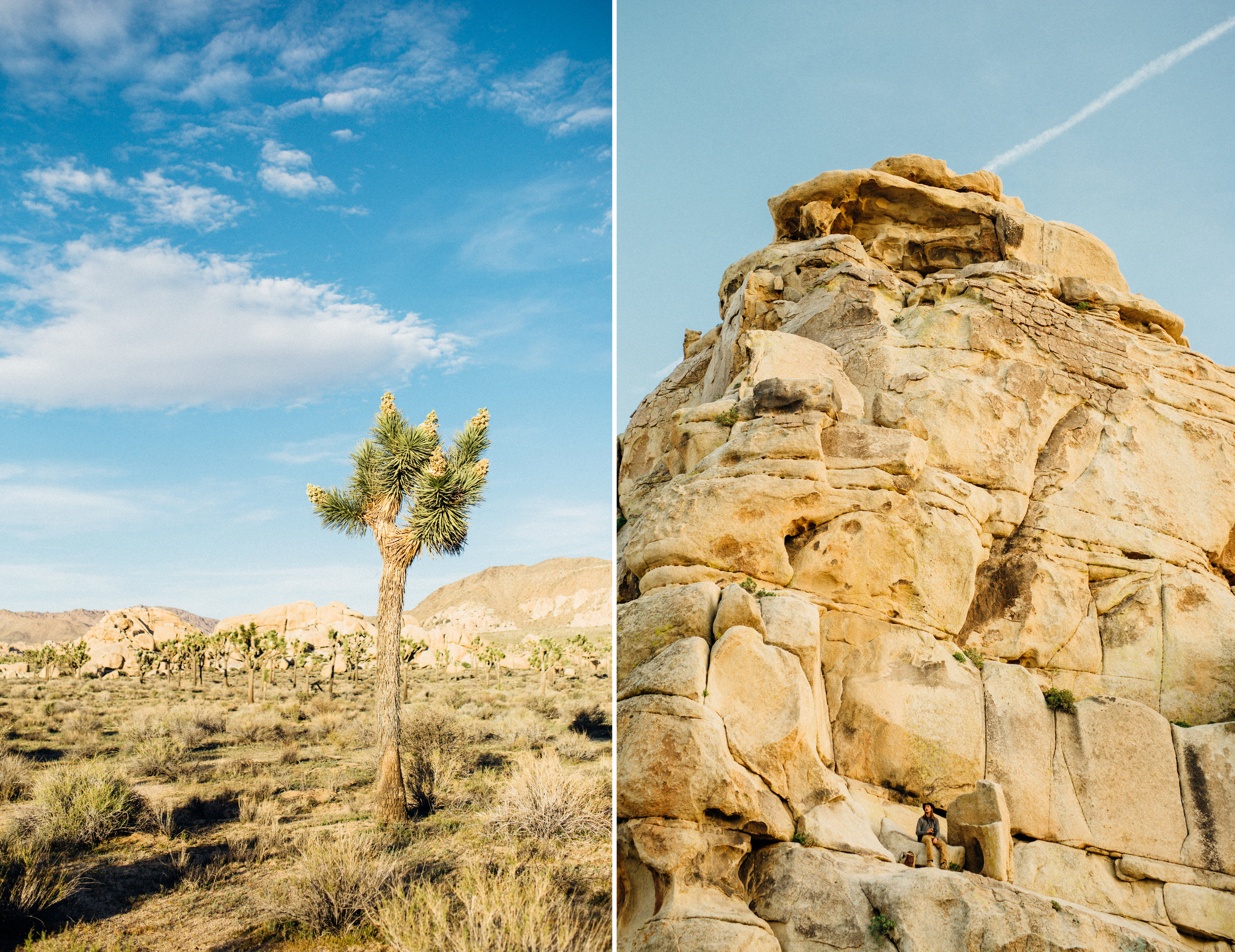 joshua-tree-california_family-photography-session_desert-palm-springs_13.jpg