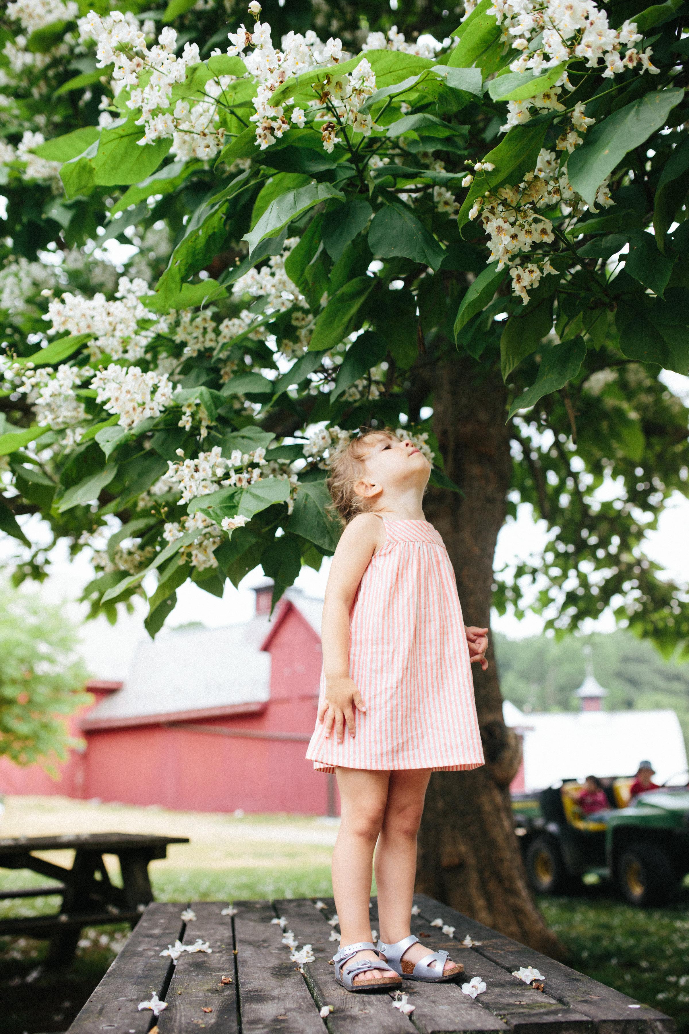 cami_muscoot-farm_westchester_new-york_child-photographer-21.jpg