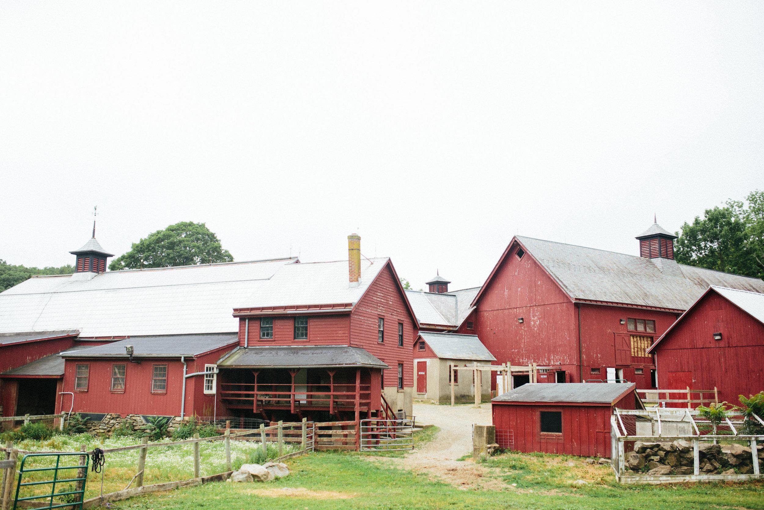 cami_muscoot-farm_westchester_new-york_child-photographer-27 (1).jpg