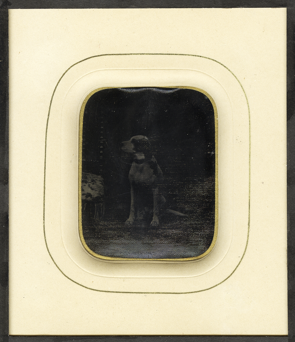 Portrait of a Seated Dog (possibly a Pointer)