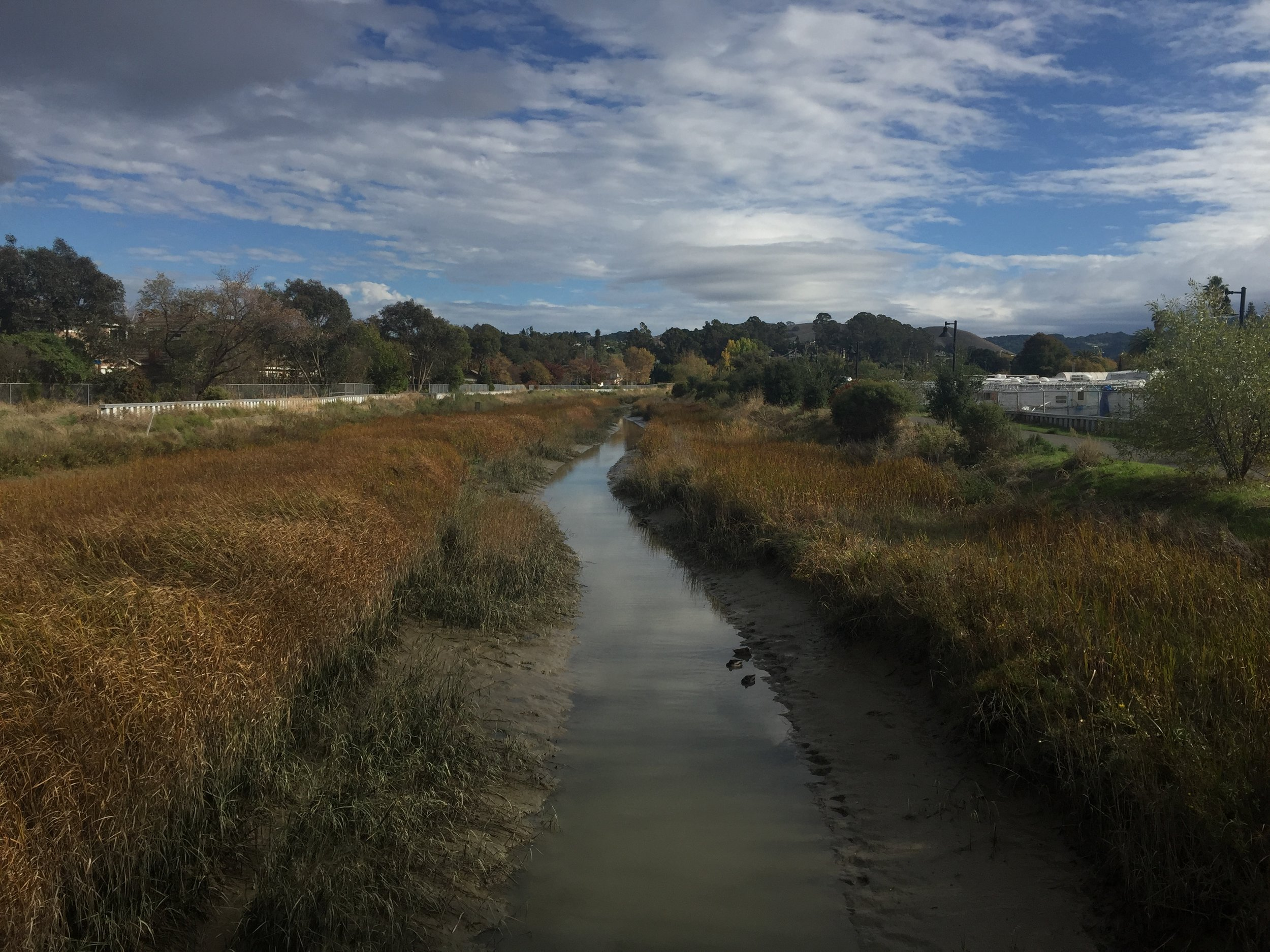 - Pinole Creek Demonstration Project (City of Pinole)Restoration Project of the Year - Contra Costa Watershed Forum