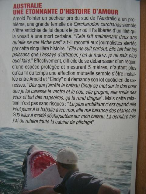 Amour de requine!.JPG