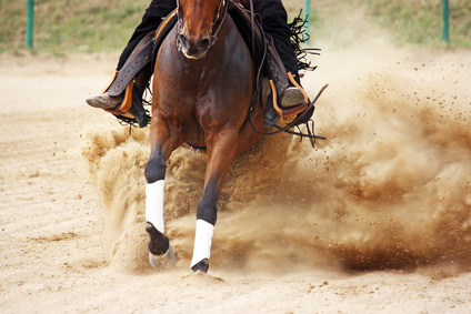 reining.jpg