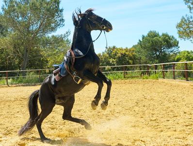 cheval en colère.jpg
