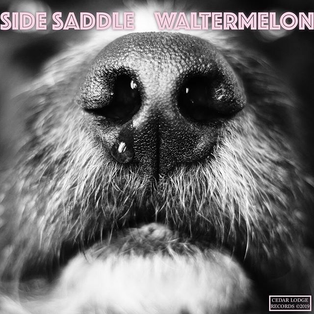 Waltermelon - EP (named after my dog, Walter) is out today.  Most of these songs were written years ago and were going to be scrapped, but they kept coming back to me. They felt important for reasons I'm still not sure of. During the making of this EP I realized how therapeutic writing & recording is for me. I turn into a real grouch when I'm not creating. I hope these tunes bring some light into your life, like they did mine.  This record could not have been made without the help, guidance, and care of @tjdumser @snifftones @bcoughs @erictaitjr @richbozek @_keeek and @kalajianofdoom  Thanks for listening.