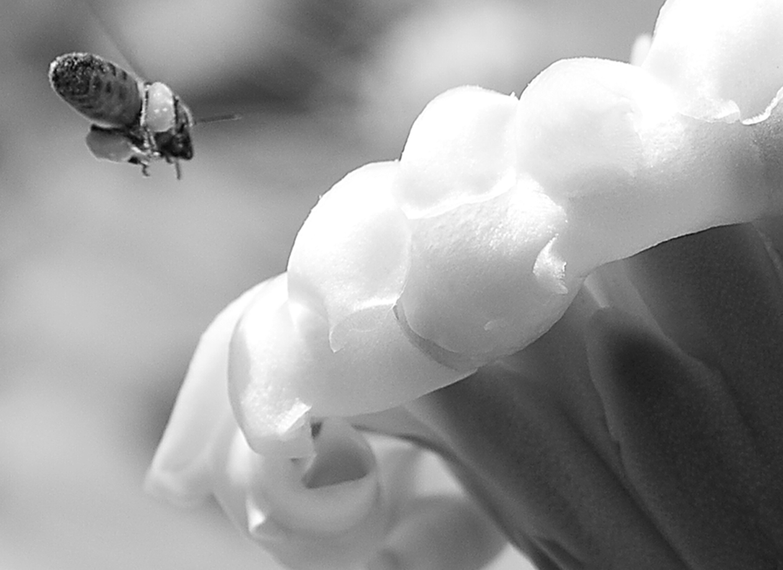 the weight of pollen.jpg