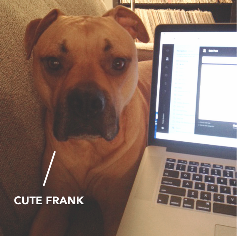 meetfrank.png