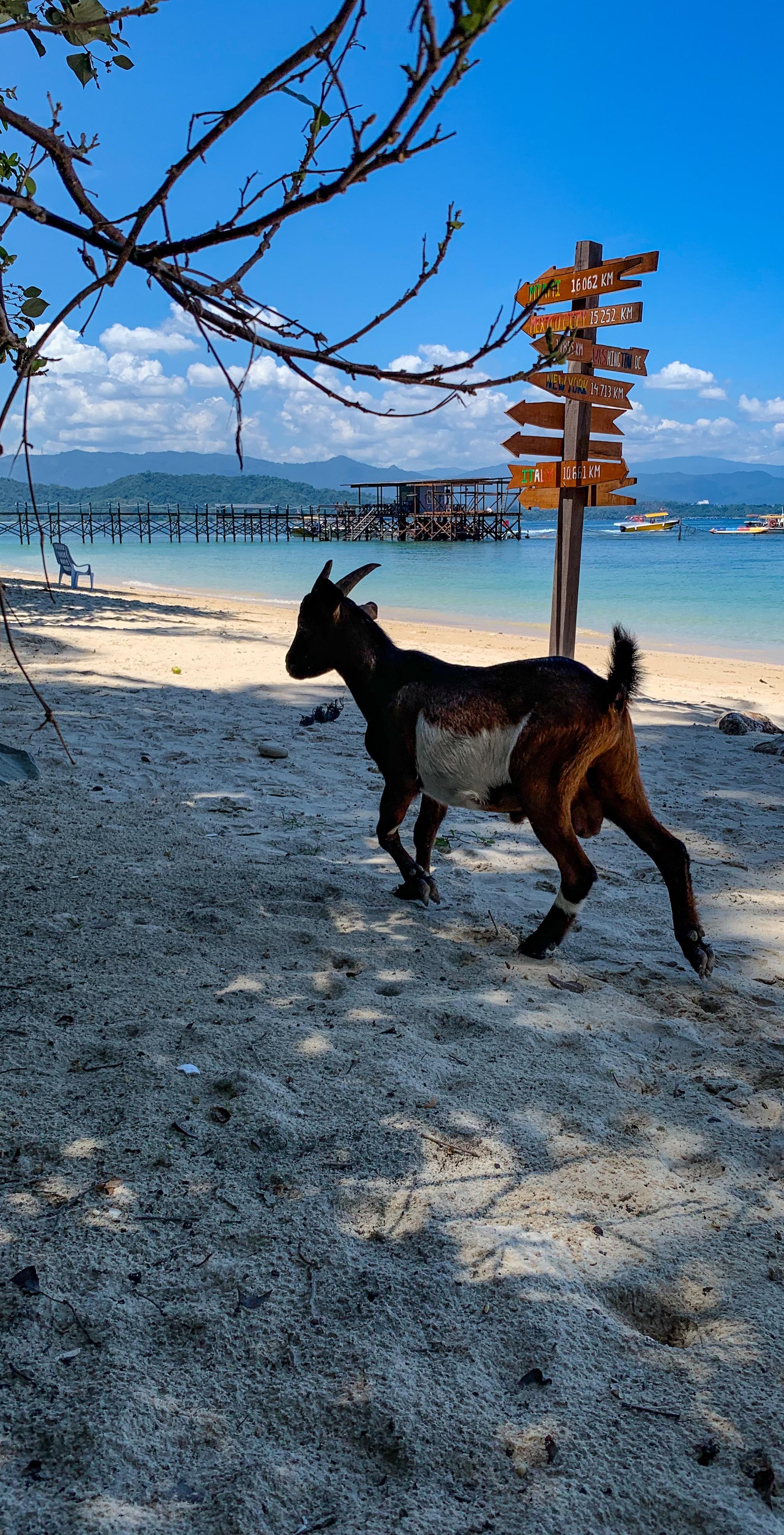 Quiet times. And goats. Sepanggar Island.