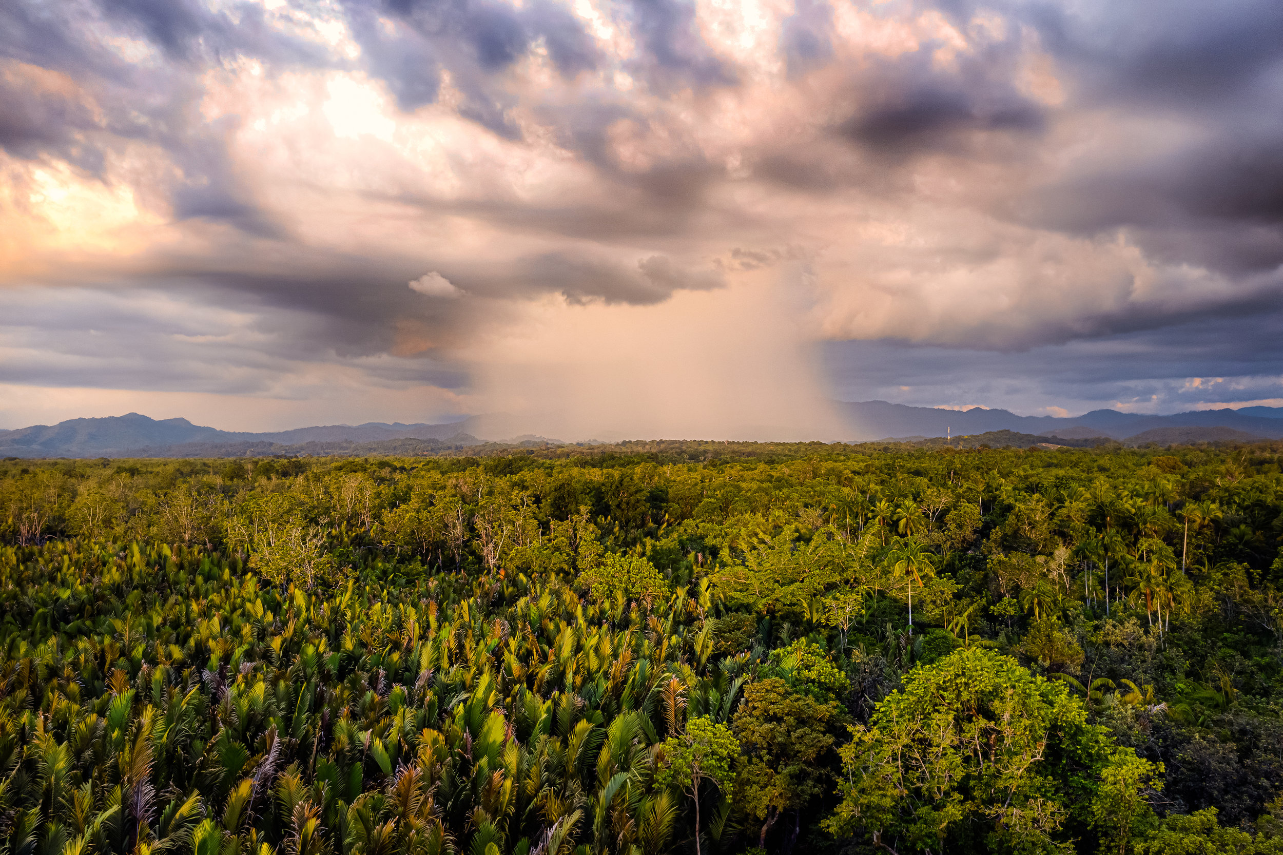 Rain clouds touch down over the rainforest in Sabah, Shot on DJI Mavic 2 Pro, by Joshua Karthik.