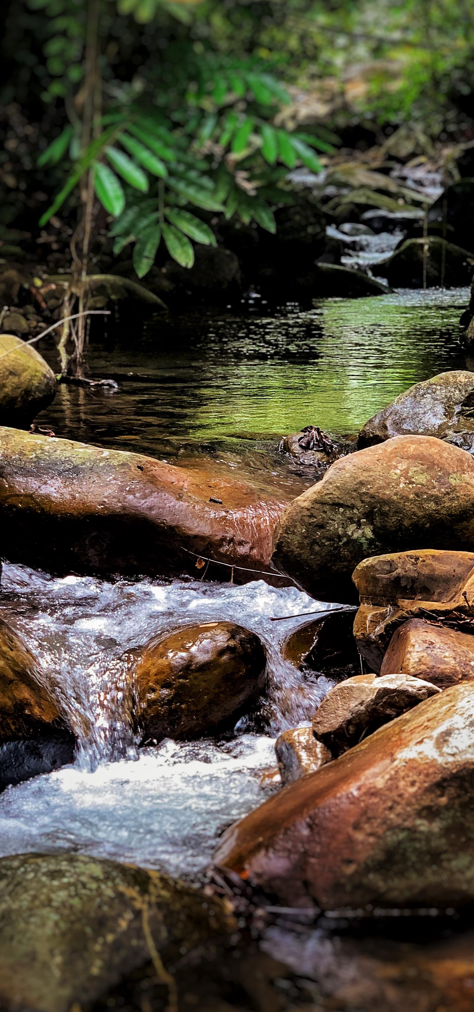 Rushing streams. Mari Mari Village.