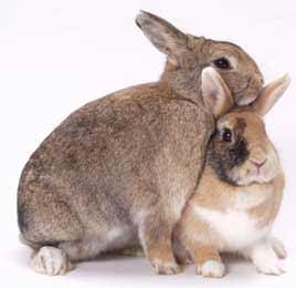 000-2-konijnen.jpg