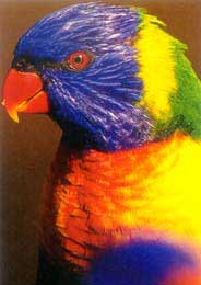 000-1-bird.jpg
